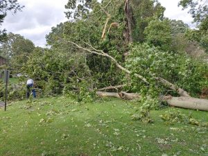 Director wankel cutting trees up after storm isaias