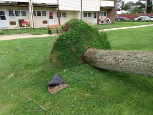 oakdale post storm cleanup pictures